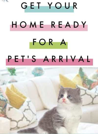 Get The Home Ready For A Pet's Arrival