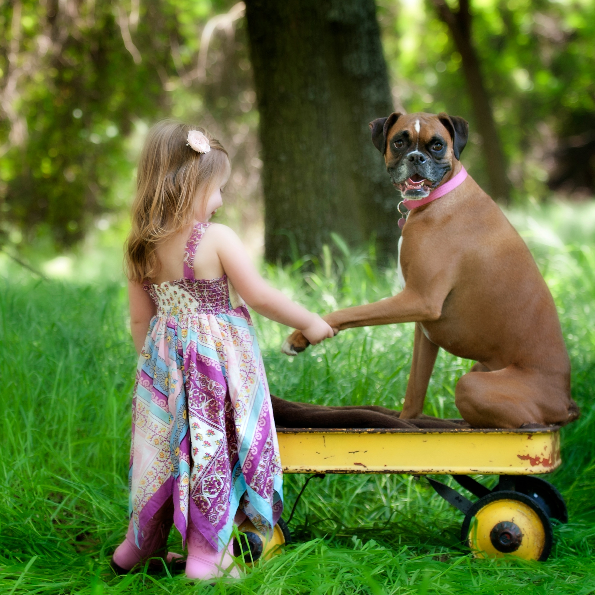 Can A Puppy Help Your Shy Child?