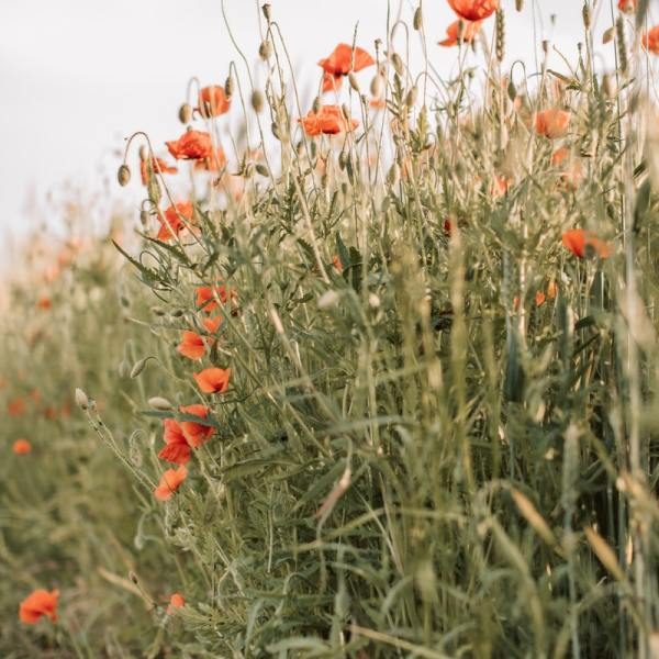 How to Beautify Your Backyard With a Wildflower Garden