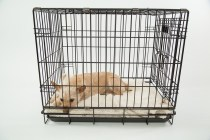 Tips for Choosing the Right Dog Cage