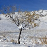 yellow tree snowfixed lafayette co funeral home and cremations