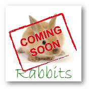 Natural Pet Products for Rabbits