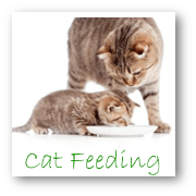 Cat Feeding Services