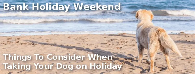 Things To Consider When Taking Your Dog on Holiday