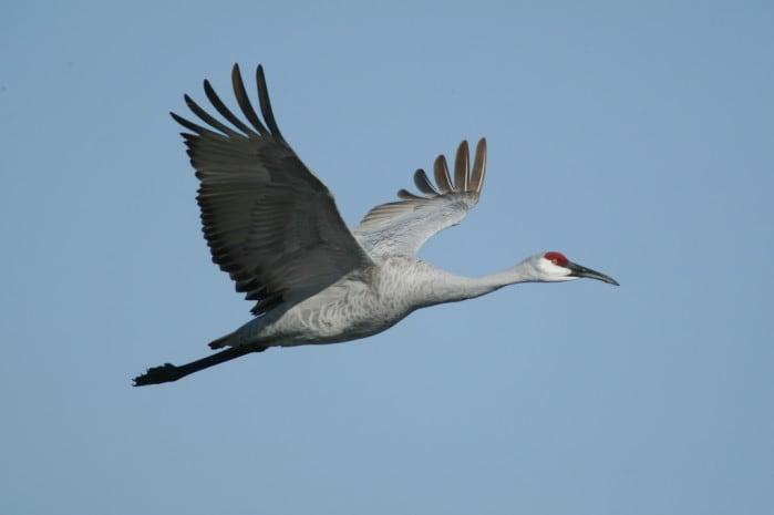the nature institute birds