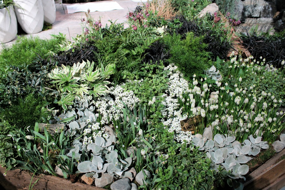 flower bed with white flowers