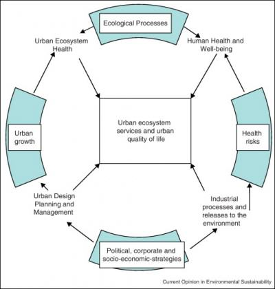 images urban planner in diagram toyota fujitsu ten 86100 wiring architecture and ecosystems from segregation to integration simple of key factors the relationship between ecology human health well
