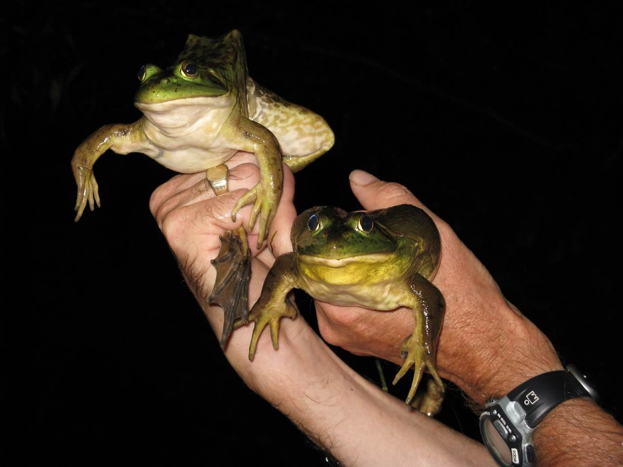 Features13_Amphibians1