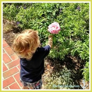 Smelling the roses at the Cummer Gardens