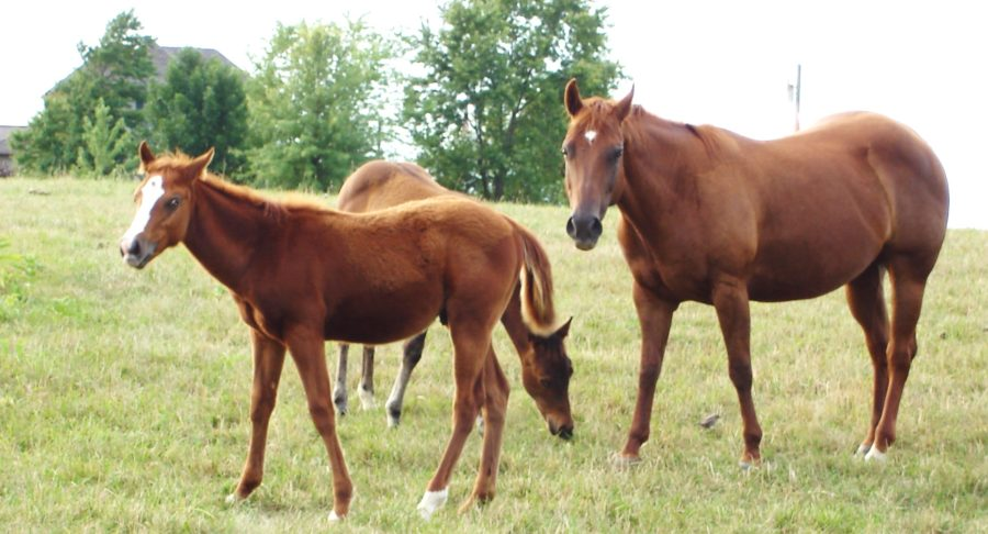 WEST NILE VIRUS CONFIRMED IN OHIO HORSES