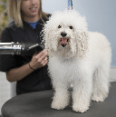 Prepare Pets for Better Grooming Visits