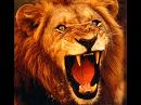 """""""Like a Roaring Lion"""""""