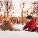 Help Pets Ward Off Winter Risks