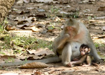 Angkor Complex, Cambodia