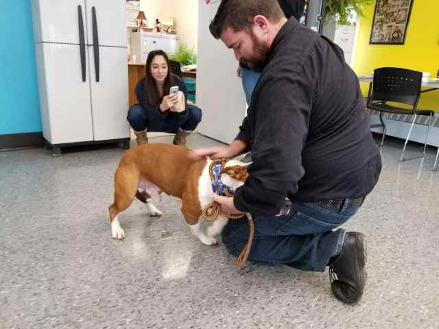 Syracuse tackles the pit bull population