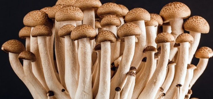 Guide to Understanding Benefits of Shrooms