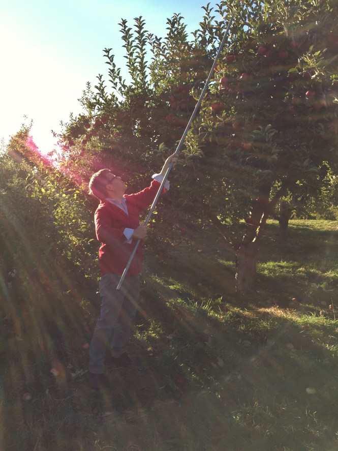 Apple Picking in N