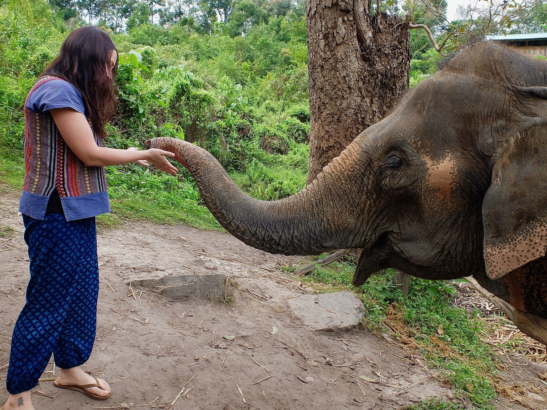woman with elephant at chiang mai elephant sanctuary