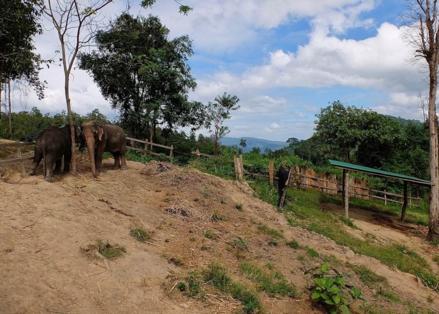 the farm at an elephant sanctuary