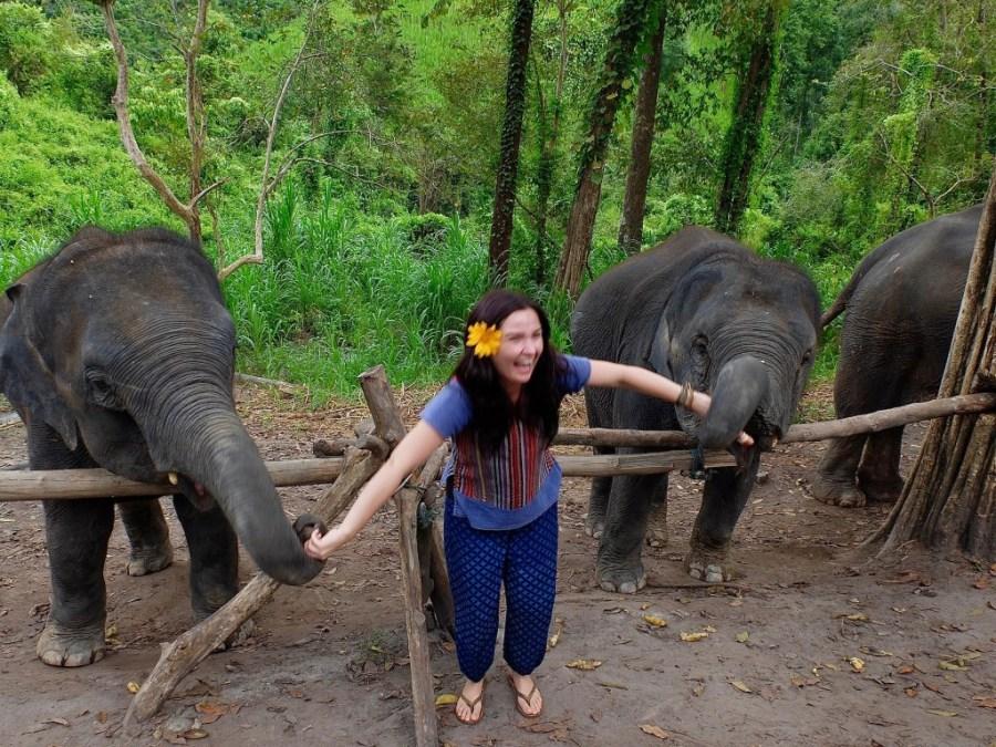 woman feeding elephants