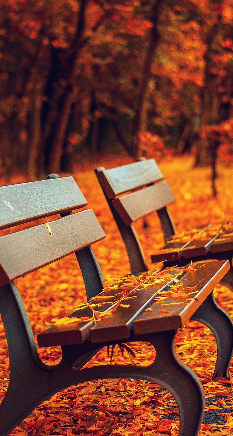 Fall Colors Wallpaper Background Awesome Autumn Wallpapers For Your Iphone Hd The Nology