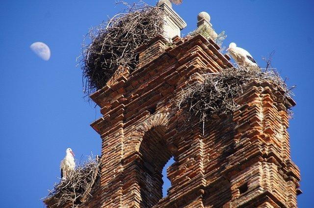 Plasencia Spain Storks