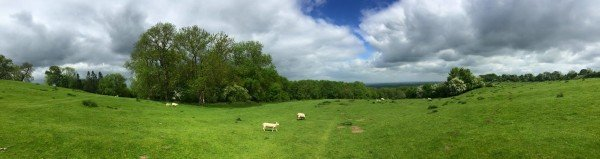 sheep meadow - vegan travel in the Cotswolds