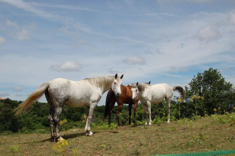 Horses - Honey House Retreat in Portugal