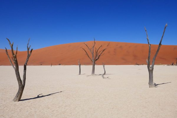 Deadvlei - tour of Namibia