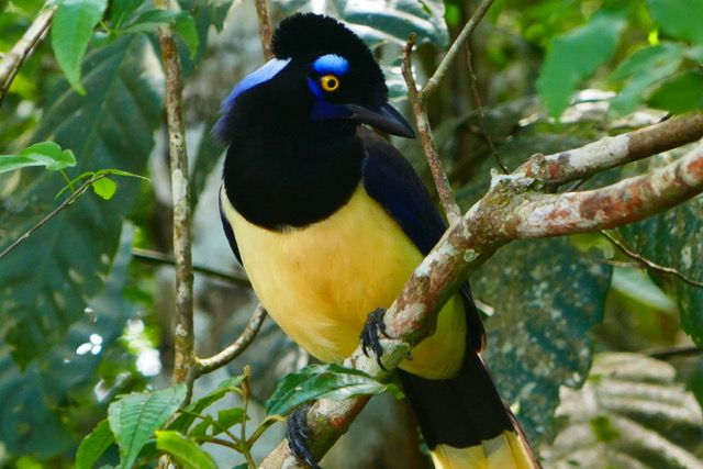 birds at Iguazu National Park