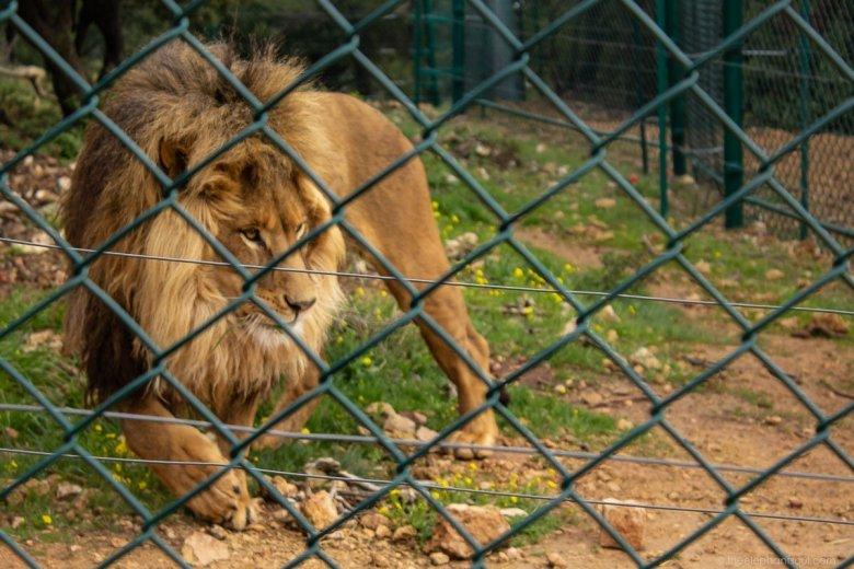Rescued wildlife at Al Mawa reserve in Amman, Jordan