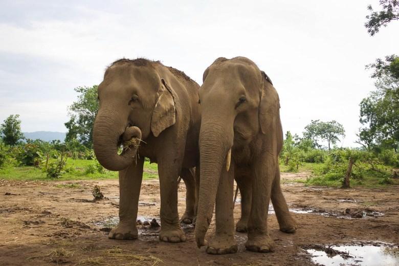 Nepal elephants need our help