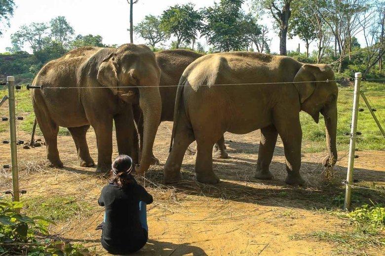 Diana with elephants in Nepal
