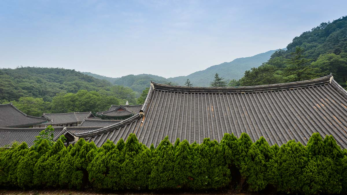Bridge to Paradise: A Korean Temple Stay at Magoksa