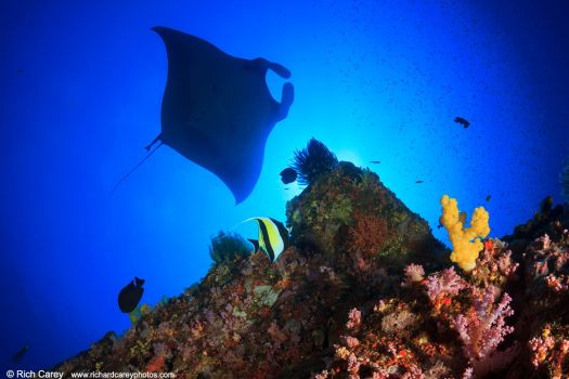 Similan Islands, Thailand, photography, underwater, Rich Carey, lessons, manta ray, coral, travel