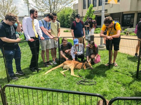 WATCH: Students take stress break at petting zoo