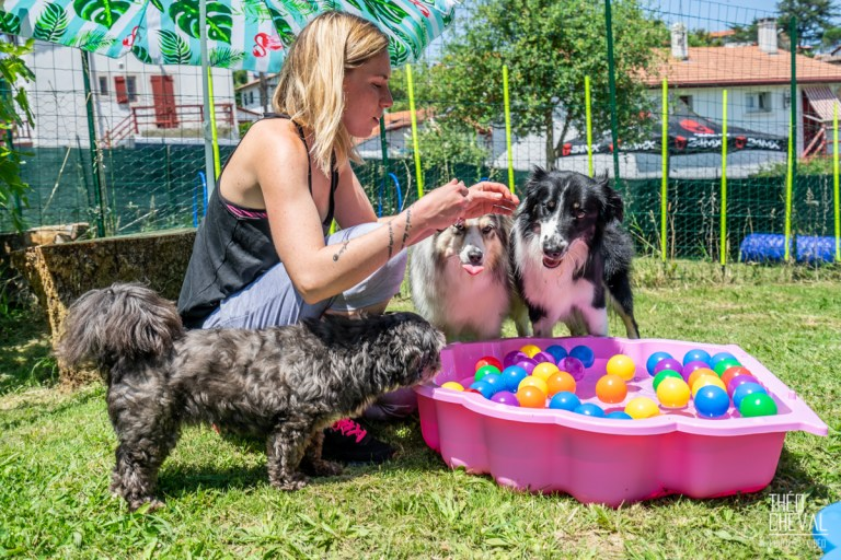 Read more about the article Dressage : Dolce Canine à Bidart