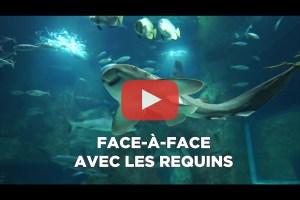 theo-cheval-video-2019-aquarium-biarritz-animation-requins