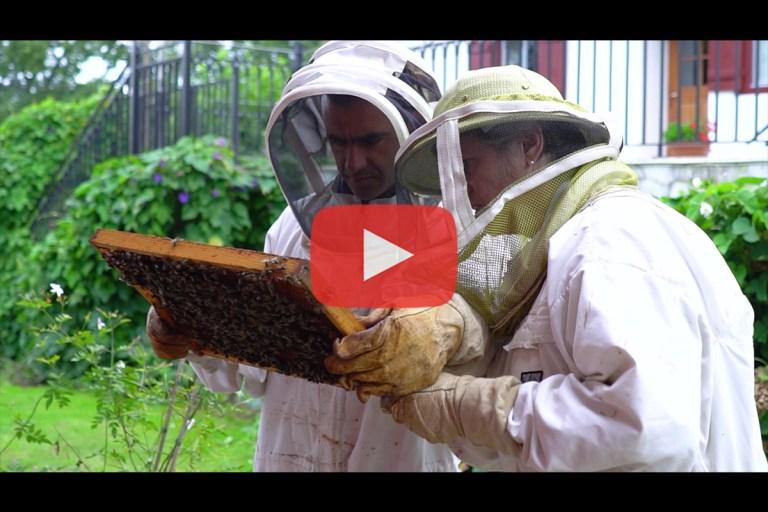 Read more about the article Les ruches de Mikela à Ascain – avec The Eco Attitude