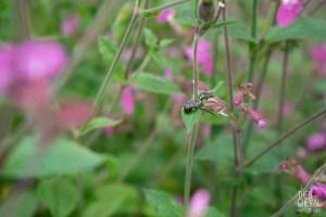 photographe-bayonne-parc-naturel-ansot-09