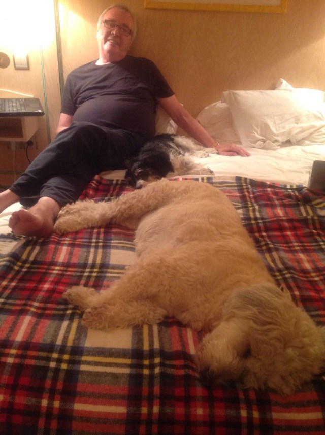 Two tired dogs and a sleepy papa.