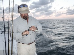 key west tarpon13