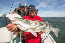 Boston Striped Bass