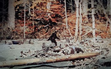 Is Bigfoot Real? 10 Most Famous Sightings That Might Make You Believe