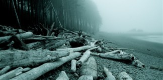 Why Do Severed Feet Keep Washing Up On The Shores of The Pacific Northwest?
