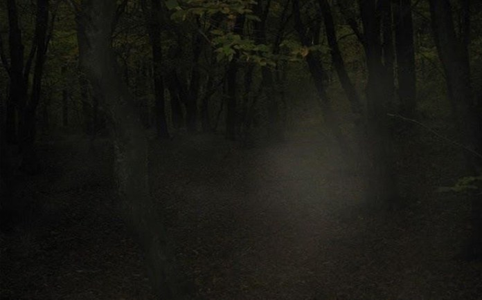 Hoia Bacui: The World's Most Haunted Forest