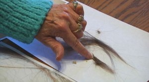 A woman in Oregon believes that she has hair and skin from Bigfoot