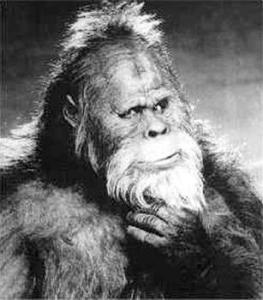 Bigfoot on Common Core exam