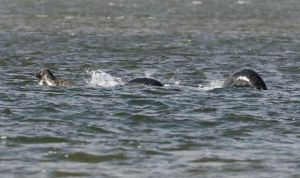Loch Ness Monster by Ian Bremner