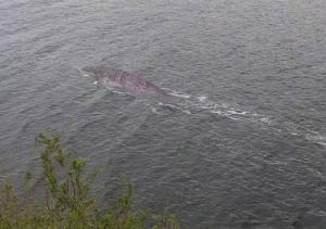 Loch Ness Monster by Steve Challice